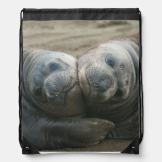 Cute Nuzzling Northern Elephant Seal Pups Backpacks