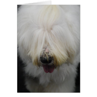 Cute Old English Sheepdog Greeting Cards