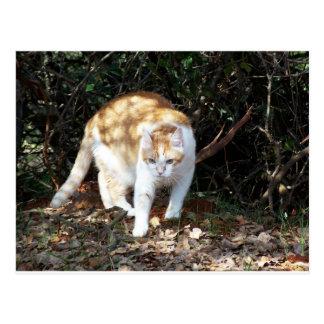 Cute Orange and White Cat Postcard