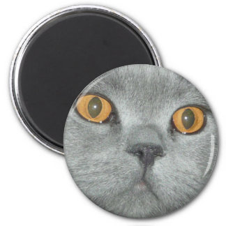 Cute Orange Eyed Kitty 6 Cm Round Magnet