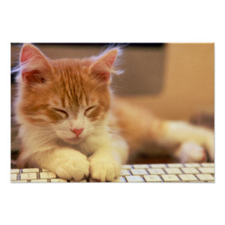 Cute Orange Kitten Falls Asleep Poster