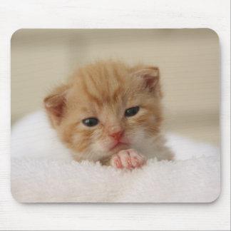 Cute orange kitten mouse pad