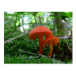 Cute Orange Mushrooms Postcard
