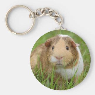 Cute orange-white guinea pig in grass key ring