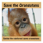 Cute Orangutan Endangered Species Poster