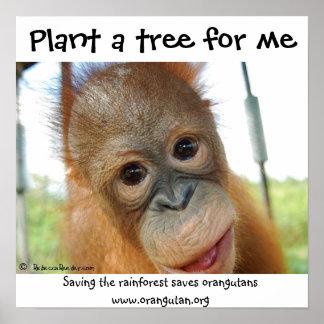 Cute Orangutan Endangered Species Posters