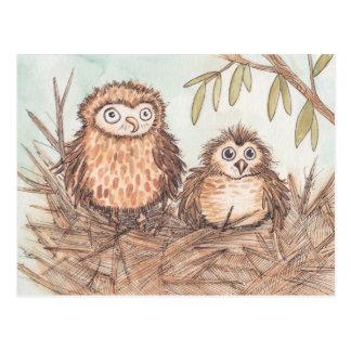 Cute Owl Brothers Postcard