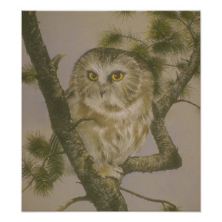 Cute Owl in Tree Art Poster Photo Art