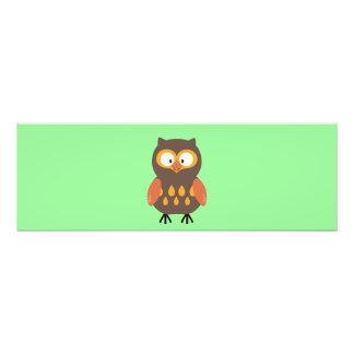 Cute Owl Photo