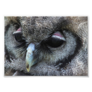 Cute Owl Photo Art