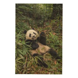 Cute Panda Eating Bamboo Wood Print