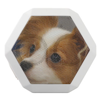 Cute Papillon Dog White Boombot Rex Bluetooth Speaker
