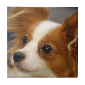 Cute Papillon Dog Small Square Tile