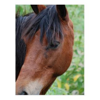 Cute Paso Fino Horse Postcard