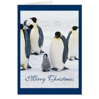 Cute penguin photo in snow holiday christmas card