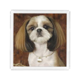 Cute Pet Animal Acrylic Tray