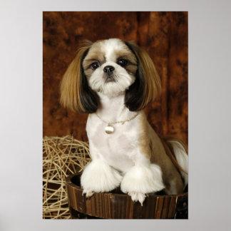 Cute Pet Animal Poster