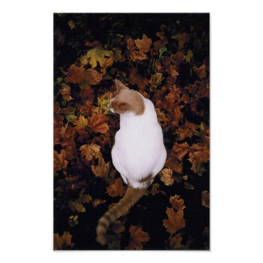 Cute Pet Cat Poster