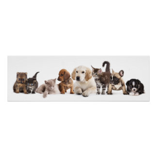 Cute Pet Panorama Poster