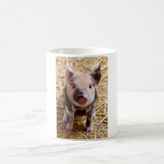 Cute Pic of a baby Pig Basic White Mug