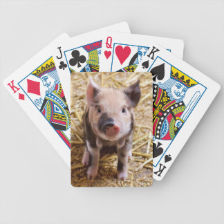 Cute Pic of a baby Pig Bicycle Playing Cards