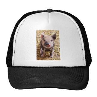 Cute Pic of a baby Pig Cap