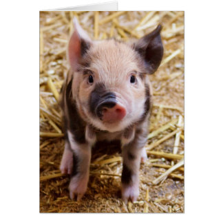 Cute Pic of a baby Pig Greeting Card