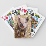Cute Pic of a baby Pig Playing Cards
