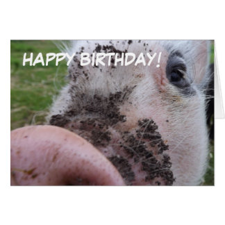 Cute Pig Birthday Card