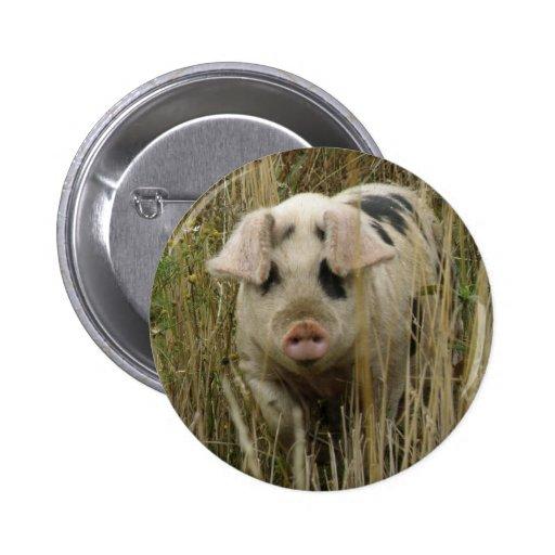 Cute Pig Button