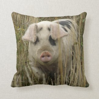 Cute Pig Pillow