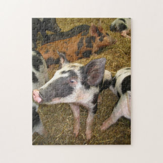 Cute Pig Puzzle