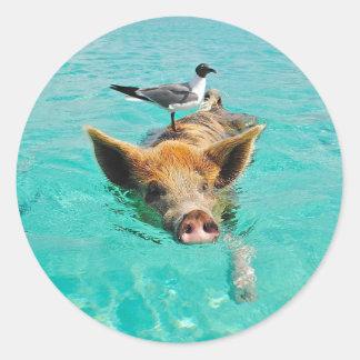 Cute pig swimming in water round sticker