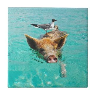 Cute pig swimming in water ceramic tile