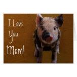 Cute Piglet Cards