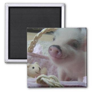 Cute Piglet Square Magnet