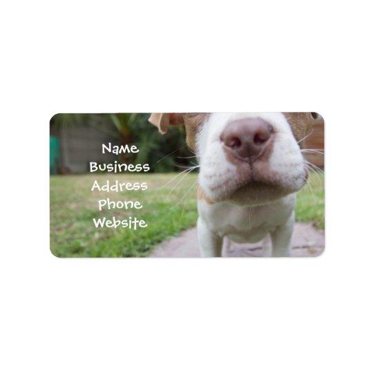 cute pit bull dog brown nose close address label