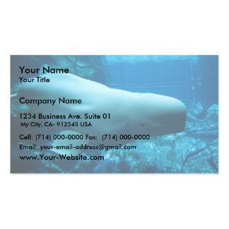 Cute Playful Beluga Whale In Aquarium At Georgia Business Card