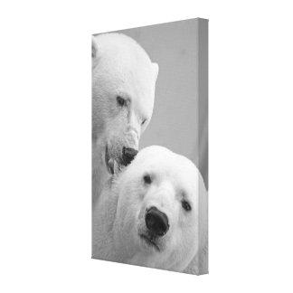 Cute polar bear couple stretched canvas prints