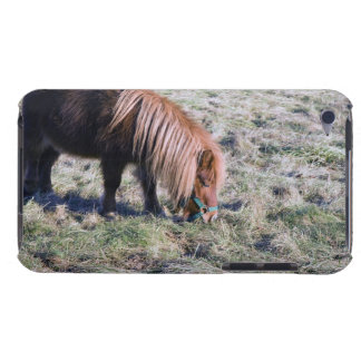 Cute pony grazing on the paddock. iPod touch cover