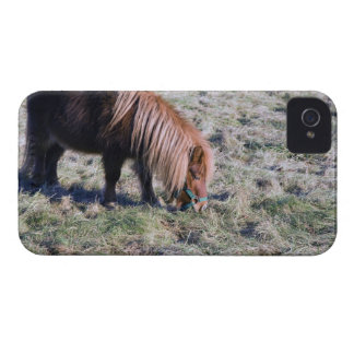 Cute pony grazing on the paddock. iPhone 4 case