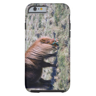 Cute pony grazing on the paddock. tough iPhone 6 case