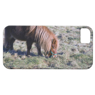 Cute pony grazing on the paddock. iPhone 5 cases