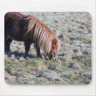 Cute pony grazing on the paddock. mouse pad