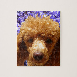 Cute Poodle Jigsaw Puzzle