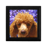Cute Poodle Small Square Gift Box