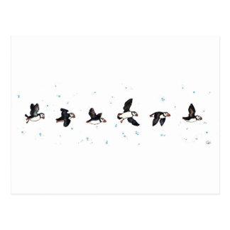Cute puffins flying postcard