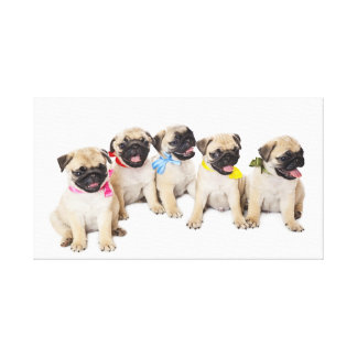 Cute Pug 25 Stretched Canvas Print