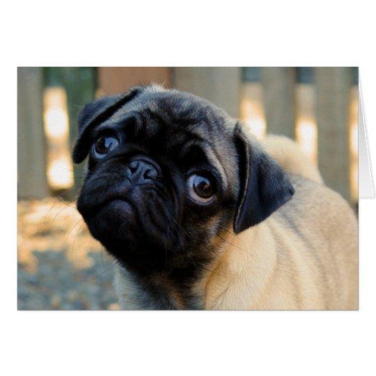 Cute Pug Puppy Birthday Card