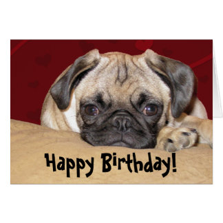Cute Pug Puppy Birthday Wish Card